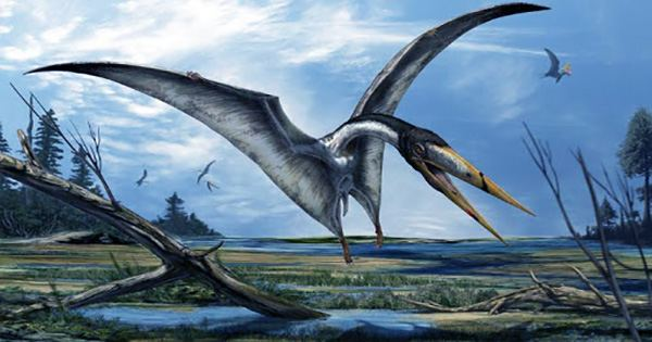 Pterosaurs with Necks like Giraffes Survived Flight Thanks To Spoke-Like Vertebrae