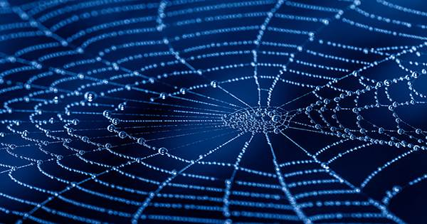 Scientists Are Turning Spider Webs into Music and It is Actually Quite Soothing