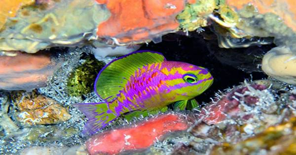 Take A Look At Some Of The Ocean Deep's Most Dazzling Baby Fish