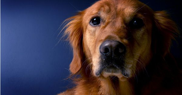 The Mere Thought of You Petting another Dog May Make Your Dog Jealous