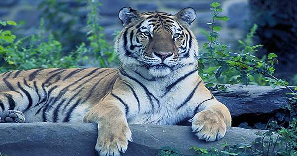 Tiger Global goes super aggressive in India