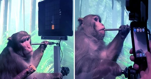 Watch A Monkey Play Video Games With Its Mind Using Elon Musk's Neuralink