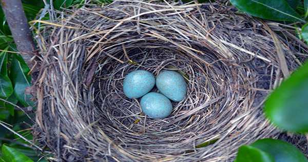 """What Pigeons Consider a """"Successful Nest"""" Will Make You Feel So Much Better About Your Own Life Efforts"""