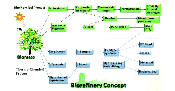 Biorefining – a petroleum refinery