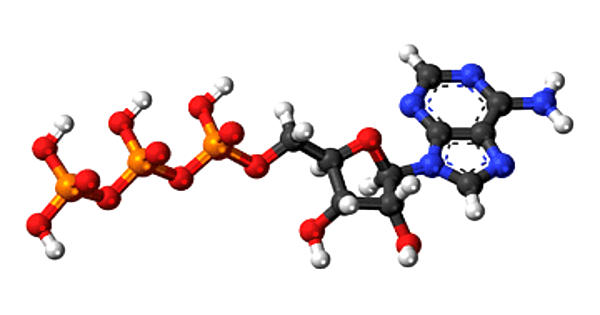 Guanosine monophosphate – a nucleotide that is used as a monomer in RNA