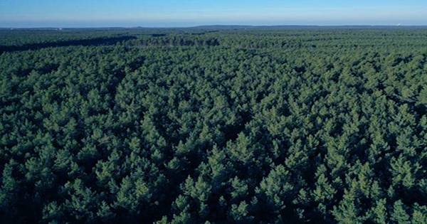 A France-Sized Area of Forest has Regrown since 2000 Worldwide