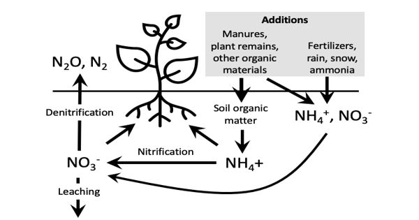 Ammonium Binds to Soil could Produce Enough Food and Reduce Environmental Damage