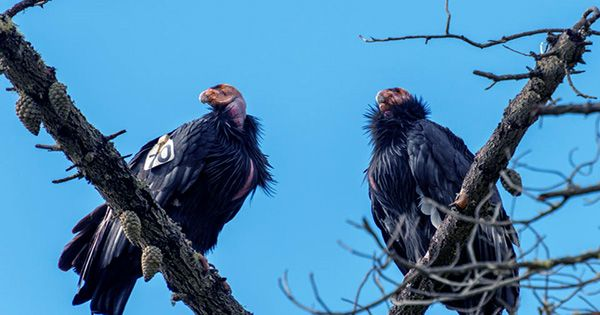 """Decking Trashed By California Condors As """"Flock of Rowdy Teenagers"""" Descend On Home"""