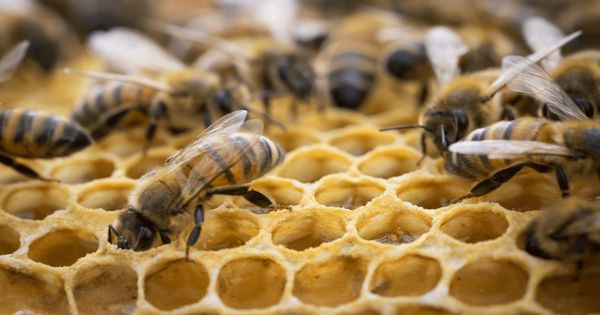 Research finds Temperature Cycles inside the Beehive