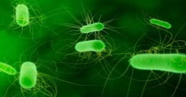 Researchers Identify the Rise of Antibiotic Resistance in E. coli