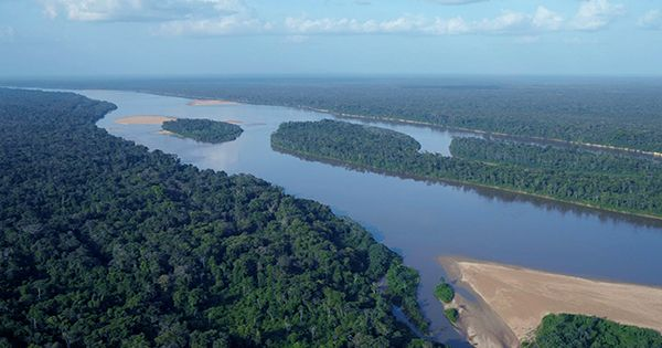 The Brazilian Amazon Now Releases More Carbon Than It Stores, New Study Shows