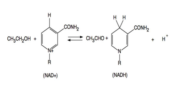 Alcohol Dehydrogenases – a Group of Dehydrogenase Enzymes