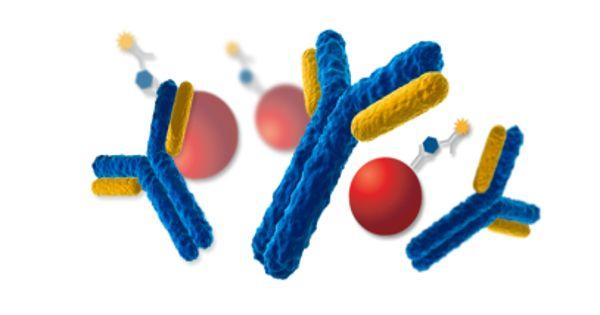 Immunoassay – a Biochemical Test