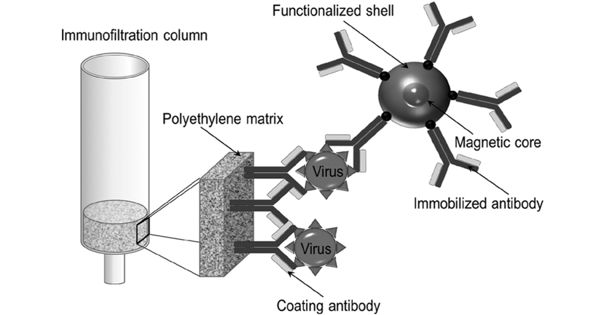 Magnetic Immunoassay – a Type of Diagnostic Immunoassay