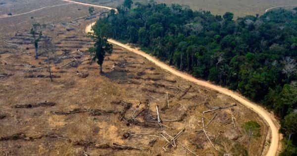 Agricultural Land being carried out Illegally causes Rainforest Destruction