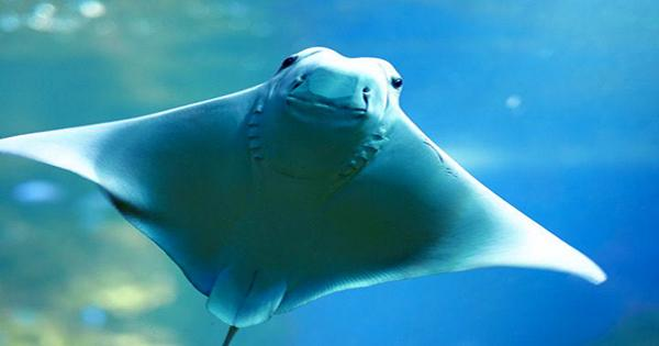 All 12 Stingrays at ZooTampa at Lowry Park have Mysteriously Died