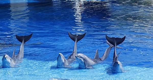 """Bottlenose Dolphin Spotted with Pilot Whale Calf in Rare Cross-Species """"Adoption"""""""
