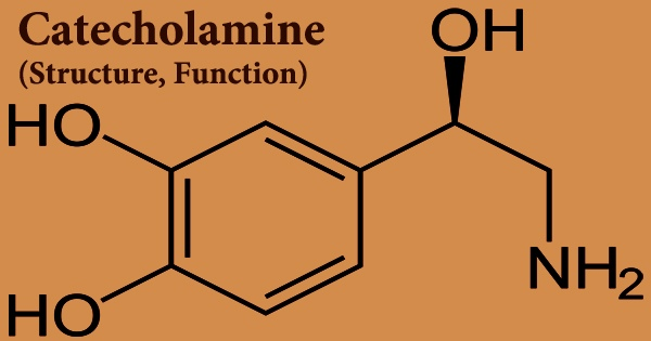 Catecholamine (Structure, Function)