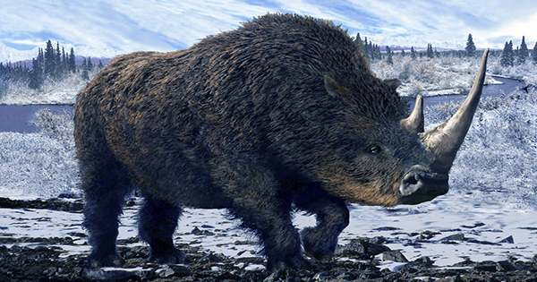Extinct Giant Rhino Found in China was One of the Largest Land Mammals of all Time