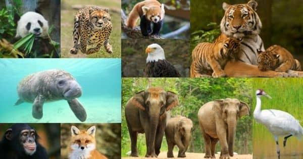 Factors Causing Rapid Disappearance of Wildlife Species – an Open Speech