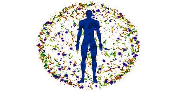 Gut Microbiome in the Digestive Tract is linked with Various Health Conditions