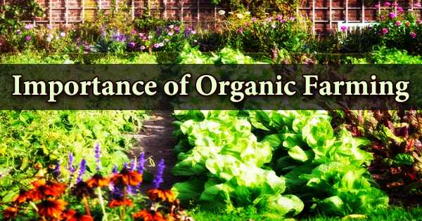 Importance of Organic Farming