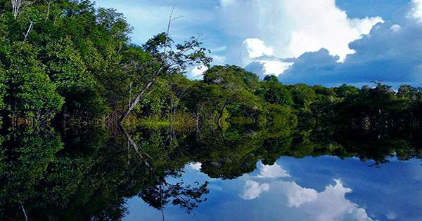 Indigenous Peoples have Helped the Amazon Stay Wild for 5,000 Years