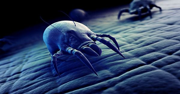 Never Hoovered your Mattress? You're Probably Sleeping on Thousands of Dust Mites