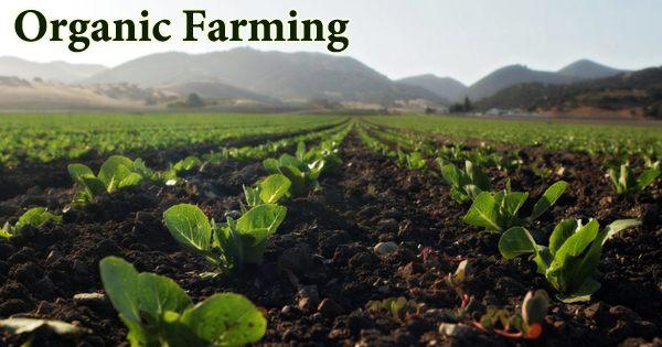 Organic Farming (Types, Advantages, and Disadvantages)