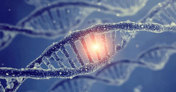 Researchers Discovered a key aspect of Gene Regulation and Gene's Controlling Region