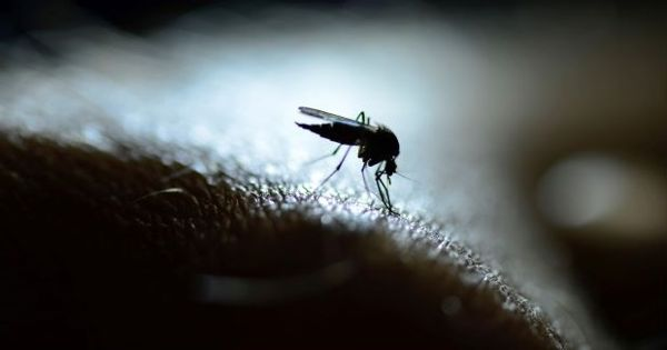 Researchers designed a Drug-like compound that Blocks Malaria Parasite Life Cycle