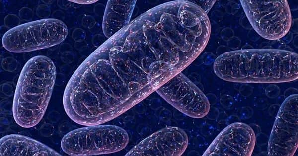 Scientists Identify a Novel Genetic Mitochondrial Disorder by Analyzing DNA Samples