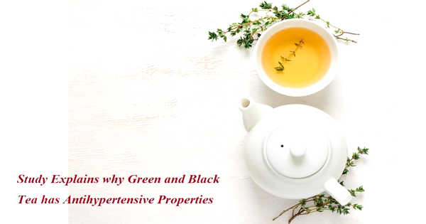 A New Study Explains why Green and Black Tea has Antihypertensive Properties