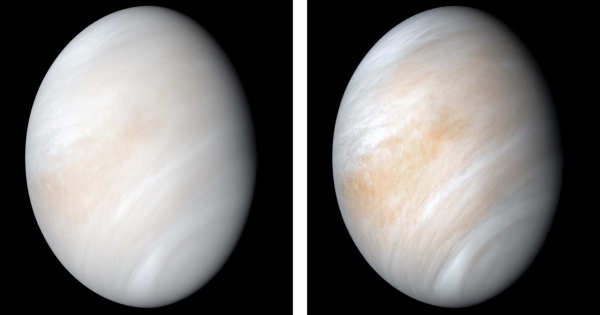 A Study Measuring Water Concentration in Venus's Atmosphere