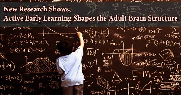 New Research Shows, Active Early Learning Shapes the Adult Brain Structure