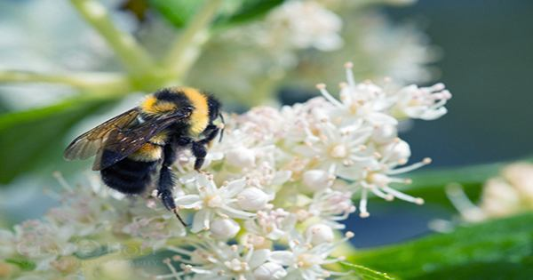 Don't Step On a Bee Day: these Charismatic Pollinators Need Our Help