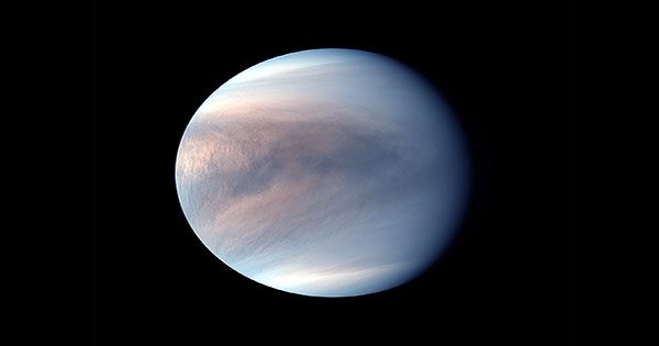 Life More Likely to Exist in the Clouds of Jupiter than Venus