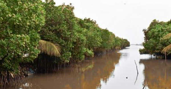Mangrove Forest Suffered Unparalleled Dieback after the Major Hurricane