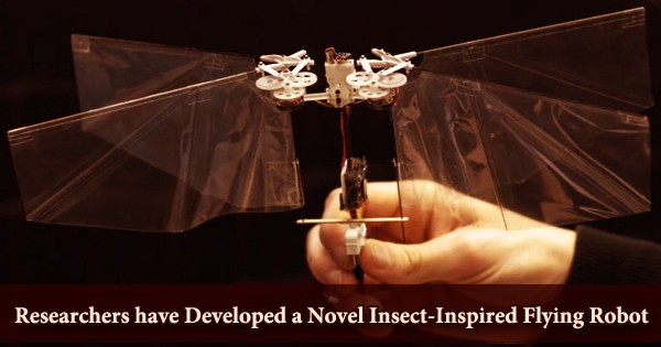 Researchers have Developed a Novel Insect-Inspired Flying Robot