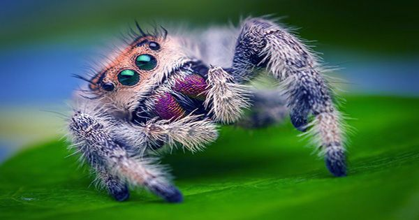 Spiders Hunt and Eat Snakes on Nearly Every Continent, Scientists Surprised to Discover