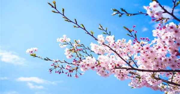 Spring – the Season I like Most