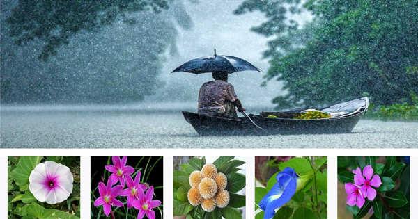 Importance of Rainy Season