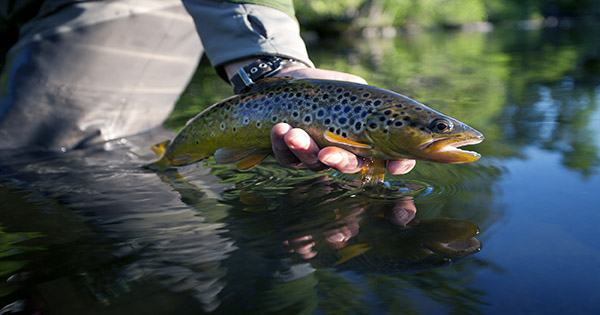 Trout on Meth: how Freshwater Contamination can Get Fish Hooked on Drugs