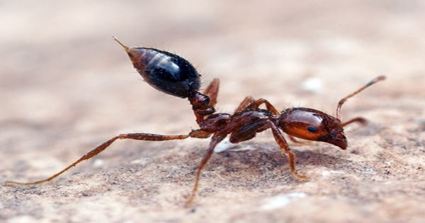 """Watch as Fire Ants Build a """"Treadmilling"""" Raft to Escape Flood Water"""