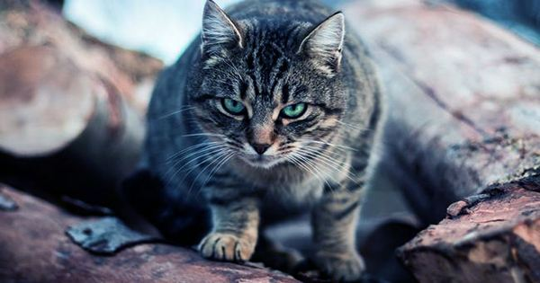 24-Hour Cat Curfew is Set for Australian Suburb, but not everyone's Happy