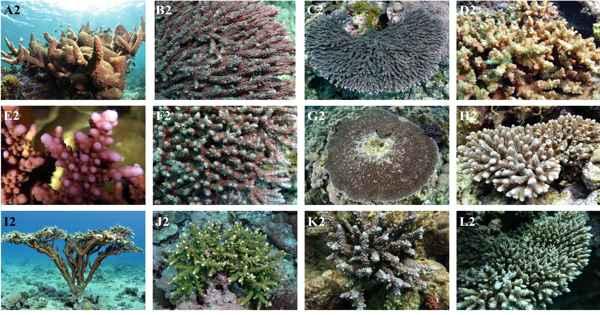 A Disease that Affects Corals has Molecular Origins