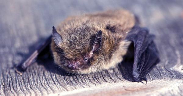 Baby Bat Babbling Bears Striking Resemblance to Human Babies