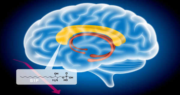 Genetic Structure of Schizophrenia Revealed by Whole Genome Sequencing