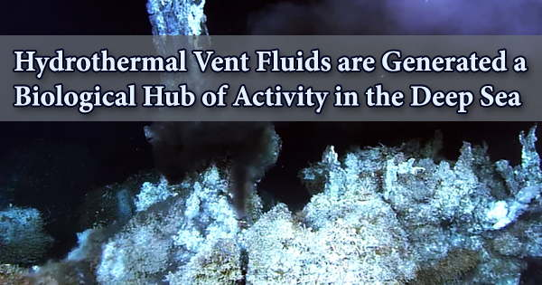 Hydrothermal Vent Fluids are Generated a Biological Hub of Activity in the Deep Sea