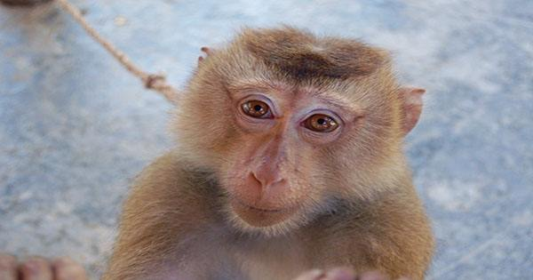 Japanese Nature Reserve Welcomes its Feisty First Female Alpha Macaque